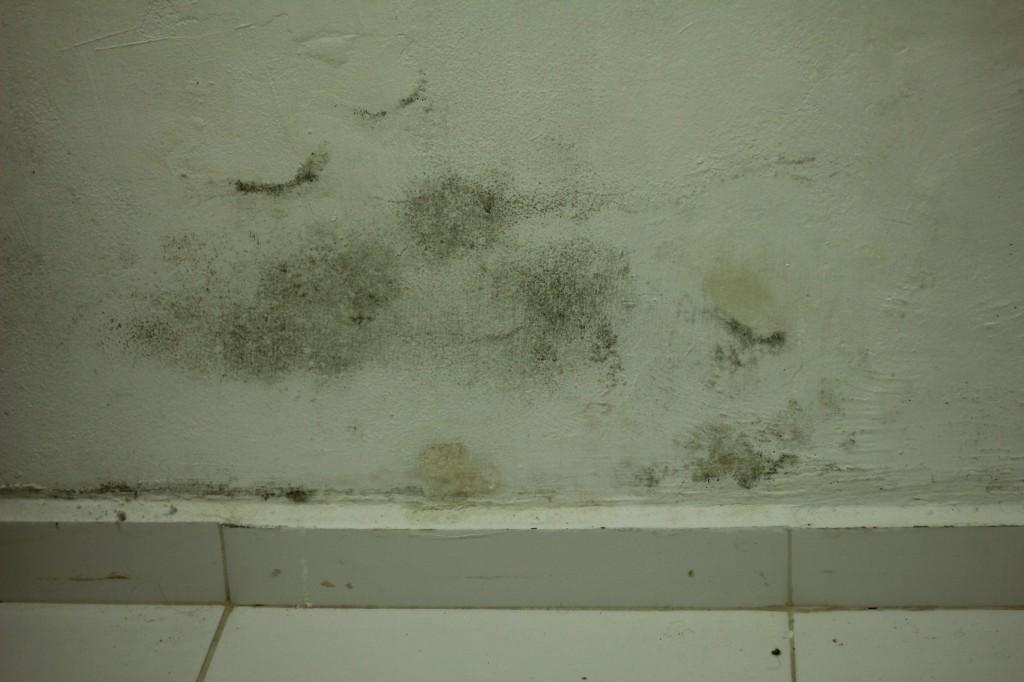 mofo em paredes