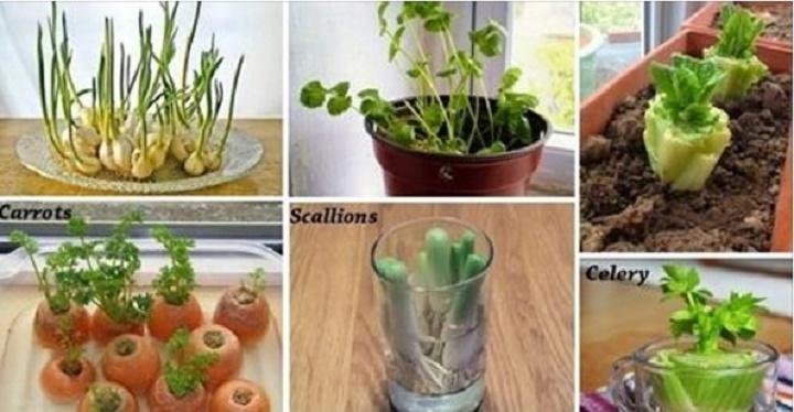 6 legumes que podem ser replantados